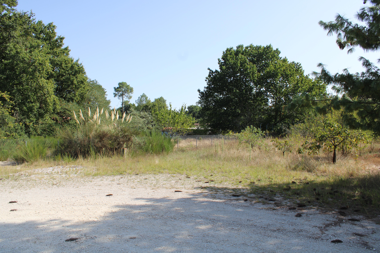 Terrain 5 000 m² constructible – Blanquefort 33290